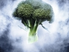 Broccoli_0100