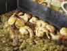 BI-foodshooting-creveti-01