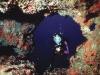 001-diving