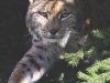 32-36 wildlife-pg_page4_image1