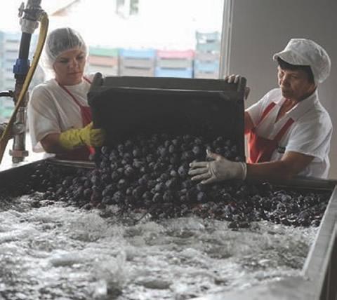 """Dintre cele  3.850 de produse tradiţionale  româneşti, doar """"Magiunul de prune Topoloveni"""" a obţinut protecţia brand-ului în Uniunea  Europeană."""