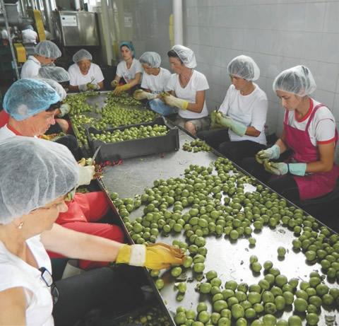 Pentru dulceaţa  de nuci verzi, fiecare nucă este curăţată cu mâna, ca acasă. Un muncitor nu poate  curăţa mai mult  de trei kilograme de nuci, într-o  zi.